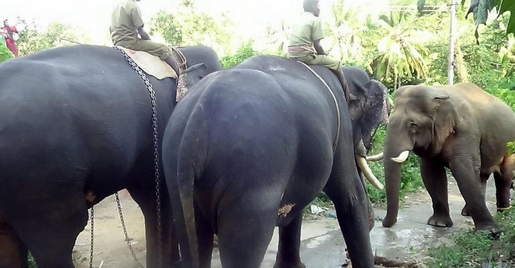 চোৰাং হাতী জব্দ ডুমডুমাত