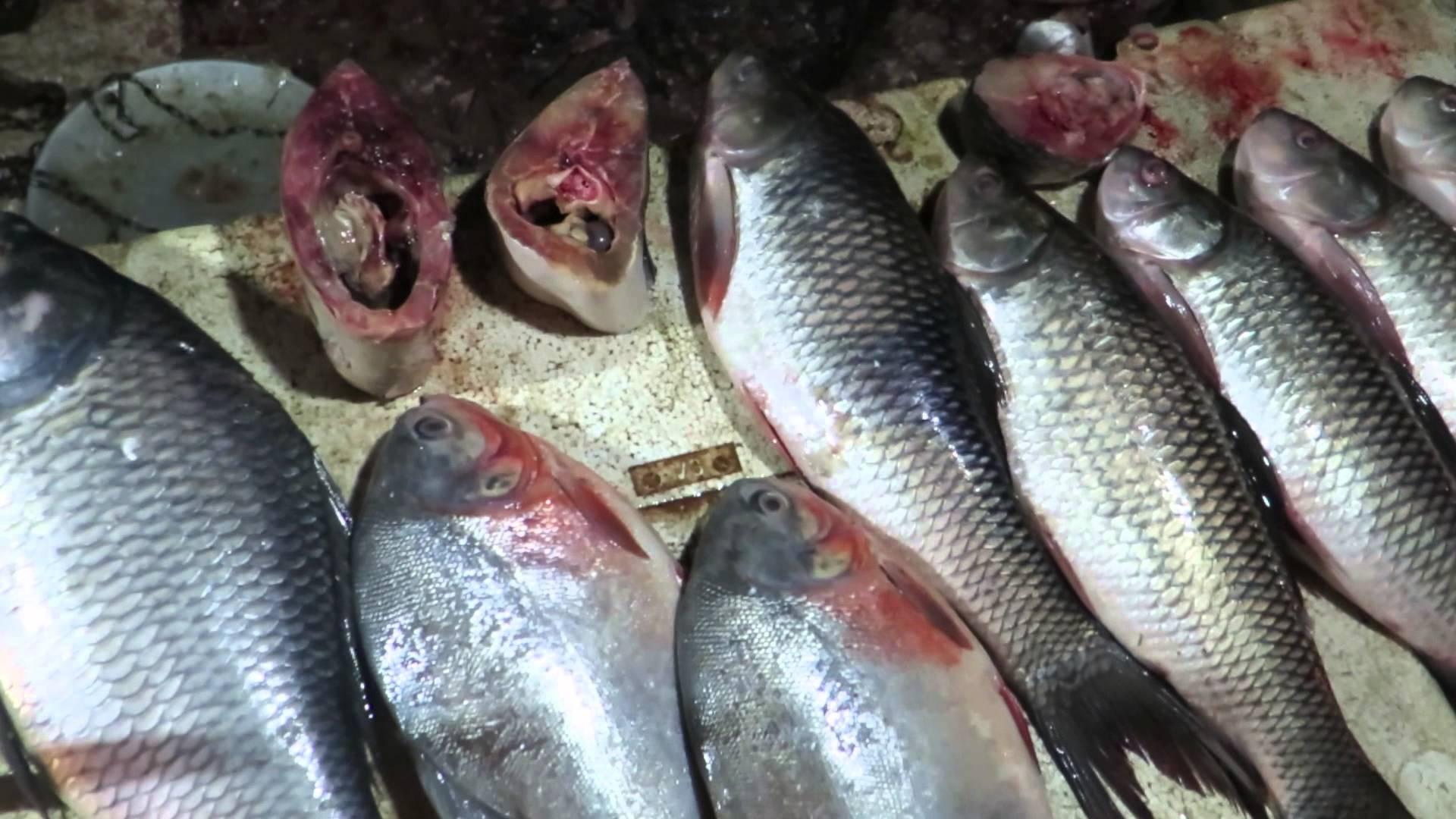 দহদিনৰ বাবে বাহিৰৰ মাছ আমদানি বন্ধ চৰকাৰৰ