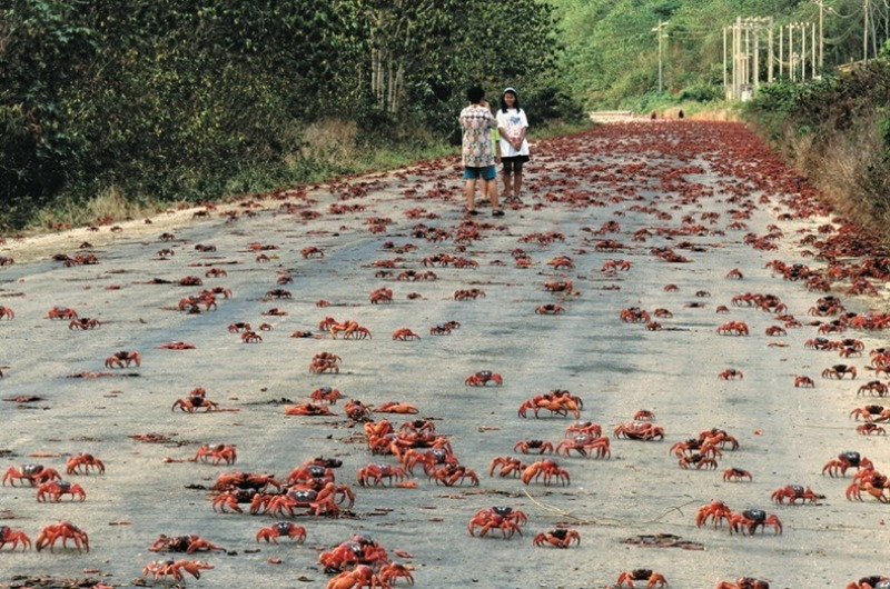 আজৱ ঠাই : এটা নদীদ্বীপ , যত মানুহতকৈ কেঁকোৰাৰ ৰাজত্ব বেছি